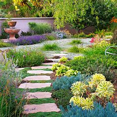 "red bottlebrush, lavander, lions tail (orange, drought tolerant) and gaillardia ""Arizona Sun"" blooms constantly. Leafy reed grass (Calamagrostis foliosa)-- I like this look for the front yard. Drought Resistant Landscaping, Low Water Landscaping, Drought Resistant Plants, Drought Tolerant Landscape, Succulent Landscaping, Low Maintenance Landscaping, Front Yard Landscaping, Landscaping Ideas, Arizona Landscaping"