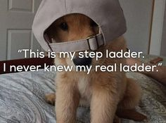 One Liner Jokes Are Even Funnier When Told By Dogs 24 Pics