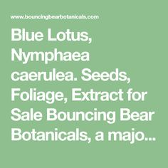 Blue Lotus, Nymphaea caerulea. Seeds, Foliage, Extract for Sale  Bouncing Bear Botanicals, a major supplier of sacred plants, ethnobotanicals, herbs and more.