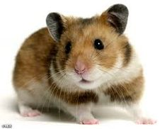 """Watch """"Tiny Hamsters Eating Tiny Burritos""""! Cutest thing ever: https://www.youtube.com/watch?v=JOCtdw9FG-s"""