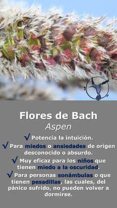#flores #de #bach #aspen #ansiedad #miedo #beneficios #en #español #miedo #para #niños #remedios #remedies #salud #terapia #terapias #alternativas #sonambulismo #pesadillas #oscuridad #terrores
