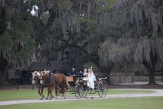©MCG Photography. Carriage Ride at Middleton Place Wedding In Charleston, Sc