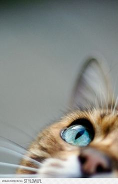 Upstairs? | #kitty #above #photography #meow |< repinned by www.BlickeDeeler.de