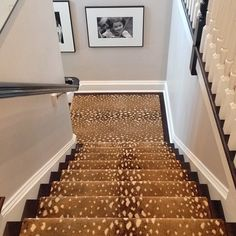 Stark Antilocarpa Stair Runner Shop The Same Carpet Under Painted Stair Risers … – carpet stairs Stairway Carpet, Carpet Stairs, Wall Carpet, Rugs On Carpet, Carpets, Grey Carpet, Bedroom Carpet, Carpet Decor, Plush Carpet
