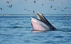 The BP Oil Spill Continues to Hurt One of the World's Most Endangered Whales
