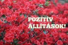1. Én vagyok az életem építésze. 2. Ma tele vagyok energiával, és boldogsággal. 3. A testem egészséges, az elmém briliáns, a lelkem nyugodt. 4. A negatív gondolatok és tettek messze elkerülnek. 5. Végtelen lehetőséggel rendelkezem, melyet ma szabadon használhatok. 6. Megbocsájtok azoknak, akik bántottak, és békét kötök velük. 7. Az együttérzés folyója mossa le a haragomat, és szeretettel tölt fel. 8. Angyalok kísérnek utamon, mindig arra, amerre nekem a legjobb. .....