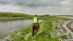 Island Trek in Galway Bay Riding Holiday, Small Island, Horse Riding, Trekking, Equestrian, Horses, Holidays, Vacation, Website