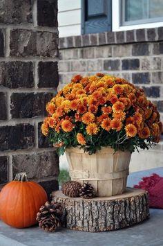 fall decor diy Fall Front Porch - Little Glass Jar Fall Home Decor, Autumn Home, Autumn Fall, Fall Mums, Fall 14, Halloween Veranda, Diy Halloween, Outdoor Halloween, Halloween Garden Ideas