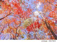 青木ヶ原樹海 紅葉 - Google 検索