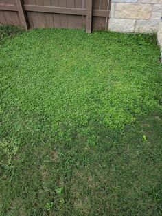 How can I clean my grass from those little plants?