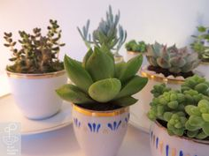 Cup // S/M Tea Pots, Succulents, Cups, Play, Glasses, How To Make, Eyewear, Mugs, Eyeglasses