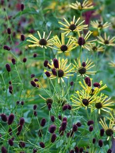 My Favorite Plant Combinations 73