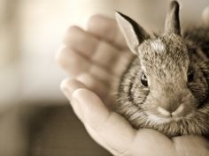 A handful of bunny :)