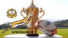 springboks and the cup - Google Search