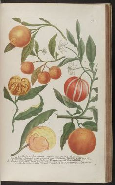 vol. 3 - Phytanthoza iconographia, sive, Conspectus aliquot millium : - Biodiversity Heritage Library