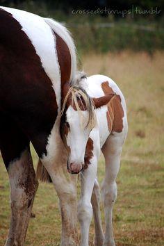 "carryonmywaywardstirrup: ""Baby Humbug snuggling up to his mummy. Most Beautiful Animals, Beautiful Horses, Beautiful Creatures, Baby Horses, Wild Horses, Pretty Horses, Horse Love, Baby Animals, Cute Animals"