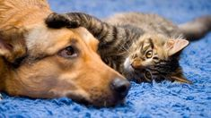 Funny Dog And Cat Videos Cats And Dogs Annoyed With Friendship