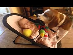 Dog Showers Baby With Toys To Stop It Crying