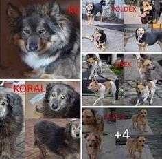 Wyrok - KUTNO - bardzo pilne! 7 psów z wyrokiem. Jeden już zabrany