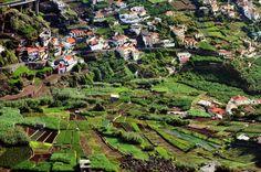 Madera - królestwo kolorów i smaków - Najpiękniejsze miejsca na wakacje - WP.PL, Madeira, Portugal