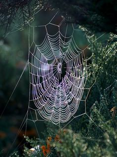 Spiderweb by positively on DeviantArt