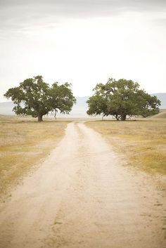 A beautiful shot of a long road in the middle of an open paddock