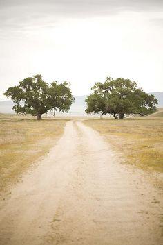 Oaks.
