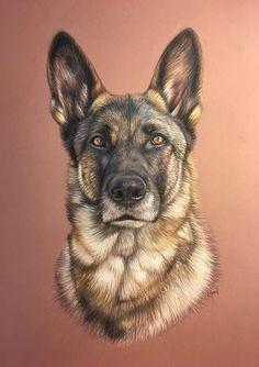 Looks like my dog Sheeba Animal Sketches, Animal Drawings, Art Drawings, Dog Portraits, Portrait Art, Color Pencil Art, Realistic Drawings, Watercolor Animals, Wildlife Art