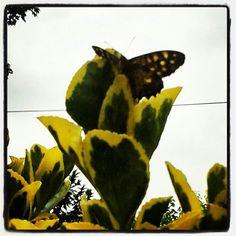Farfalla giallo immaginazione