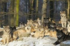 Love Of Wolves's photo.