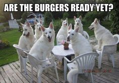 The Hungry | Animals Memes