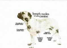 The Use of Essential Oils for Dogs with Cancer. Wonderful site including treatment options and recipes Young Living Oils, Young Living Essential Oils, Best Practice, Lymphoma In Dogs, Petit Basset Griffon Vendeen, Essential Oils Dogs, Oils For Dogs, Pet Health, Essential Oils