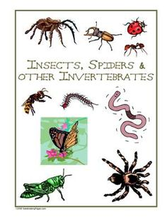 Sample Gallery - Nature Study Pages Kids Things To Do, School 2017, Nature Study, Scouts, Earth, Activities, Gallery, Children's Books, Natural History