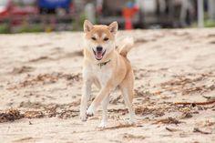 やまよく走る All Types Of Dogs, Husky, Animals, Animales, Animaux, Animal, Animais, Husky Dog