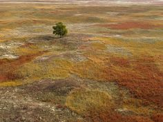 """This Is What It Looks Like at the Center of America - Slide Show - NYTimes.com """"Autumn grasses in Sheridan County, Neb. The bluestem grass turns a deep rust color in the fall"""""""