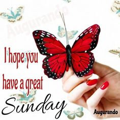Best Good Morning Sunday Images! Always Updated Images! Sunday Gif, Good Morning Sunday Images, Happy Sunday Quotes, Have A Great Sunday, Good Morning Quotes, Good Morning Beautiful Flowers, Evening Quotes, Friends Image, Online Friends