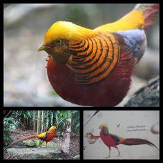 Beautiful birds at Melbourne Zoo, Melbourne Australia