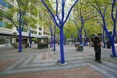 """An art project entitled the """"Blue Tree Project"""" was installed in the Park by the Seattle Parks and Recreation Department. The Department contracted with artist Konstantin Dimopoulos to produce this project that entailed painting 16 honey locust trees a bright ultramarine blue."""