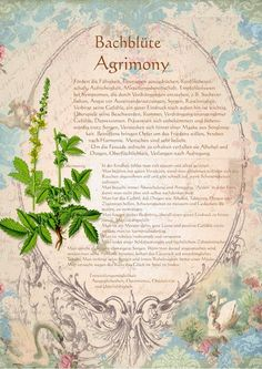 Bachblüte Agrimony - Odermennig