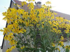 Flowers in Wildpark Schorfheide, Germany