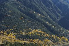 Forest mountain slope covered with evergreen forest and yellow trees in autumn. Calm landscape with coniferous and yellow trees, landscape for travel and Yellow Tree, Evergreen Forest, Forest Mountain, Mountain Landscape, Fall Season, Seasons, Autumn, Vacation, Mountains