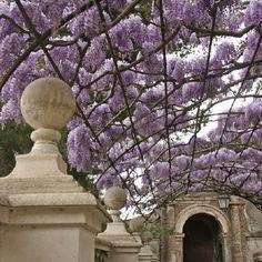 Tivoli: Villa d'Este Gardens / Tivoli / Italy