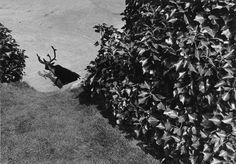 Paul den Hollander / Photography