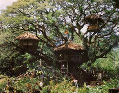Tree full of houses