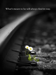 Many times we can find beautiful things among the pain and despair we face!