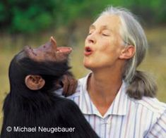 A happy chimpanzee orphan living at Jane Goodall Institute sanctuary. Jane Goodall (the woman in this picture) has devoted her whole life for chimpanzees. The world needs more people like her Jane Goodall, Primates, All Nature, Human Nature, Our Lady, G Adventures, Amazing Women, Amazing People, Extraordinary People
