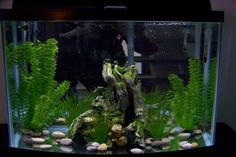 Bare Bottom Fish Tank - Feng Shui and all that jazz. . .