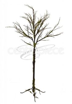 Tree Moss Covered W/Feet 1300cm Centerpieces, Woods, Woodland Forest, Center Pieces, Forests, Table Centerpieces, Centre Pieces, Centerpiece Ideas, Wood