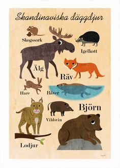 Scandinavian mammals :) man i want to learn swedish. Learn Swedish, Swedish Men, Swedish Language, Animal Posters, New Poster, Woodland Creatures, Lovely Creatures, Woodland Animals, Scandinavian Design