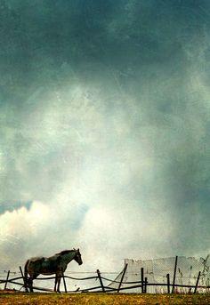 'The Horse' von Vera Kämpfe bei artflakes.com als Poster oder Kunstdruck $27.72